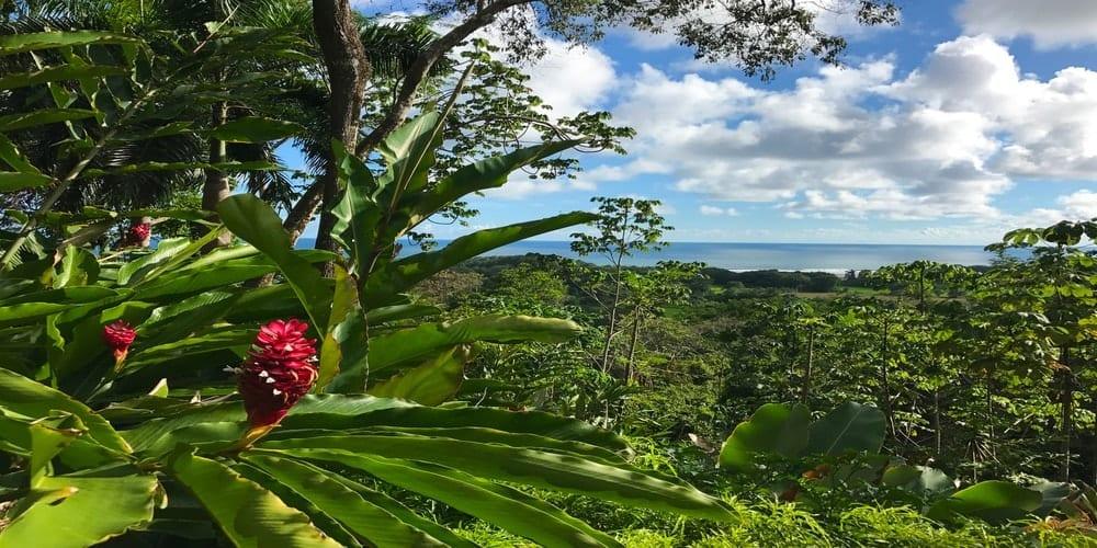 rainforest ocean views Costa Rica home for sale